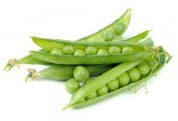 UNDER THE MICROSCOPE - What is Pea Protein? - MSC Nutrition   Expert nutrition and exercise blog   Scoop.it