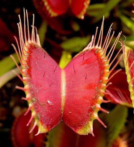 What Plants Talk About   hydrogen2oxygen   Alternative Science   Scoop.it
