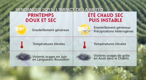 Vendanges 2015 : une météo pour un grand millésime | Route des vins | Scoop.it