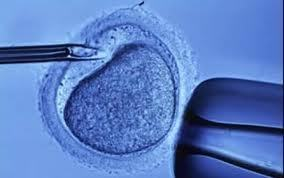 Influence of acupuncture on the outcomes of in vitro fertilisation when embryo implantation has failed: a prospective randomised controlled clinical trial. [Acupunct Med. 2013] - PubMed - NCBI | IVF and Acupuncture | Scoop.it
