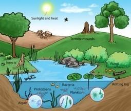 Ecossistema - Biologia | Resumo Aulas Biologia | Scoop.it