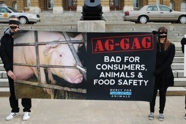Activists Fight Idaho Ag-Gag Law, Stop Factory Farming Abuse | Global Animal | Nature Animals humankind | Scoop.it