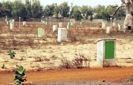 La coopérative agricole Saame Sa Moomel refuse d'être l'agneau ... - Sud Quotidien   Diprofav cooperative agricole   Scoop.it
