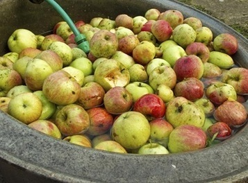 Apple growers call for 'ungagging' on health benefits of fruit - The Grocer   fromitalyweb   Scoop.it