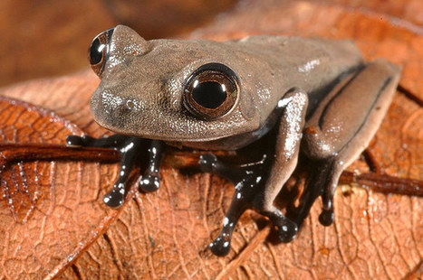 Sixty new species found in Suriname – in pictures | Science Fields | Scoop.it
