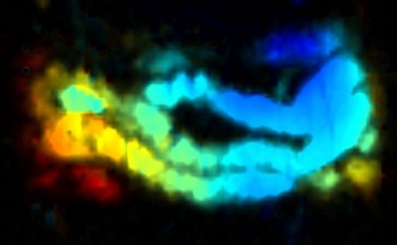 New imaging method allows to see how the small intestine operates in real time | Amazing Science | Scoop.it