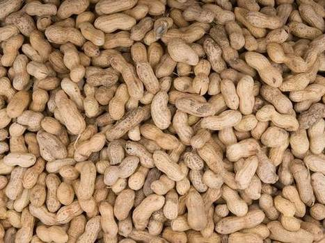 New food scandal over peanuts is 'more serious' than the horsemeat crisis   World problem   Scoop.it