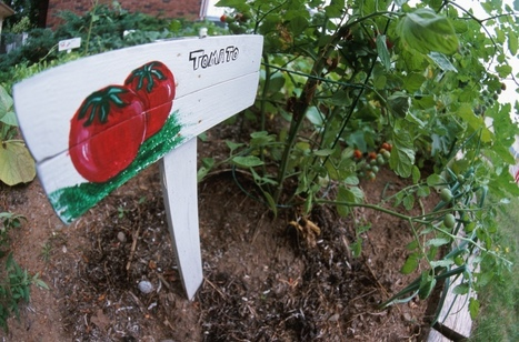 Food Safety in the School Garden | School Gardening Resources | Scoop.it