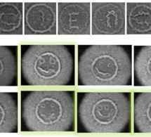 Descubren cómo las bacterias cooperan para defenderse de los antibióticos | Microbe | Scoop.it