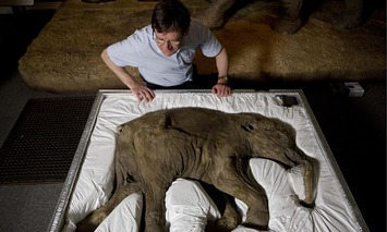 The mammoth that trampled on the history of mankind | The Guardian | À la une | Scoop.it