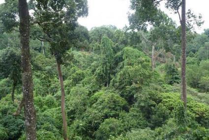 L'Atlas forestier interactif du Gabon (AFIG) bientôt disponible - Le Nouveau Gabon | De Natura Rerum | Scoop.it