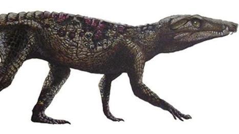 BBSRC mention: Crikey! Prehistoric crocodiles ran like dogs | BIOSCIENCE NEWS | Scoop.it