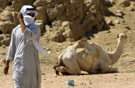 Egypte: deux Britanniques enlevés dans le Sinaï par des Bédouins   Égypt-actus   Scoop.it