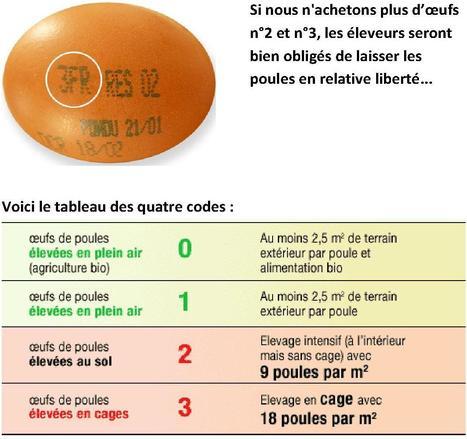Facile de choisir les œufs que l'on mange! | 16s3d: Bestioles, opinions & pétitions | Scoop.it