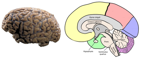 Using ThingLink in Medical Education | Salud Publica | Scoop.it