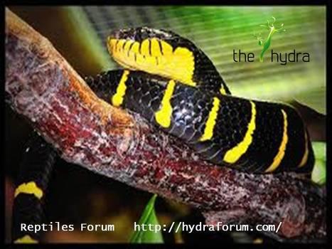 Planted Aquarium Forum | Hydra Forum | Scoop.it