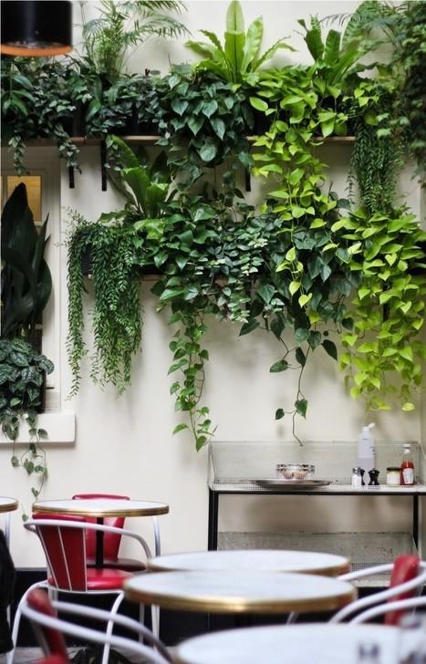 Restaurant Visit: Hotel Amour Courtyard in Paris: Gardenista | Balcony Gardening | Scoop.it