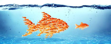 Comment maximiser vos chances de réussite ?   Innovation, Business Models, Start-up et Strategie   Scoop.it