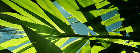Quantum Effects Of Photosynthesis Could Improve Energy Efficiency | Photosynthesis | Scoop.it