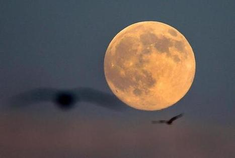 "First of three 'supermoons' is seen - The Boston Globe | Buffy Hamilton's Unquiet Commonplace ""Book"" 