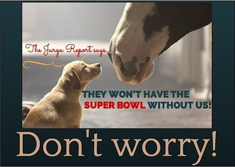 Yes! You'll See a New Budweiser Clydesdale Commercial During the 2015 Super Bowl | horse-celebrities | Scoop.it