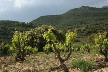 South African wine exports hit record in 2013 | decanter.com | Southern African Travel Adventures | Scoop.it