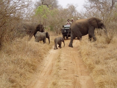 How Safe Safari Tour Are? | HotelCluster.com Blog | Adventure Travel - Hang on Tight | Scoop.it