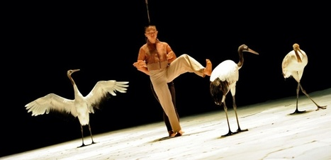 Le chorégraphe Luc Petton danse avec... des grues ! | Biodiversité | Scoop.it