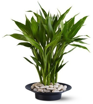 Vastu Tips for Plants at VastuChakra.com | Gardening is more than Digging the Dirt | Scoop.it