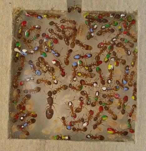 Une étude détruit le mythe de la fourmi travailleuse | Nouveaux paradigmes | Scoop.it