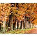 La madera, el mejor aliado del medio ambiente | ECOSALUD | Scoop.it
