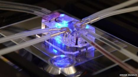 'Organs-on-chips' wins design award - BBC News | this curious life | Scoop.it