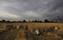 L'achat des terres sera mieux encadré, mais les ONG restent ... | ISR, DD et Responsabilité Sociétale des Entreprises | Scoop.it