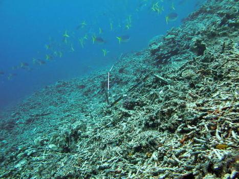 """Fundación Ecomar » Un bloque oceánico """"inestable"""" podría provocar un tsunami en Australia   Agua   Scoop.it"""