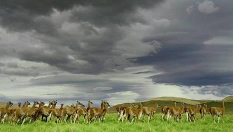Voyages au bout du monde avec Art Wolfe | Nature & Planète | Scoop.it