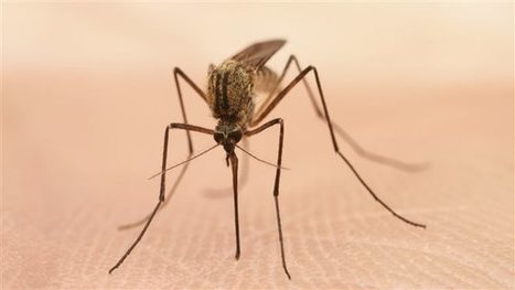 Canada. Le virus du Nil occidental identifié au Manitoba | EntomoNews | Scoop.it