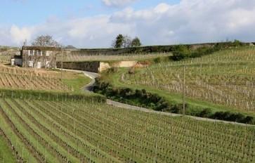 Bordeaux 2011: Merlot réussit malgré une année difficile | Autour du vin | Scoop.it