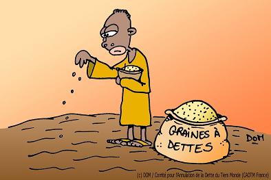 Certains OGM pourront obtenir des crédits carbone - Actu-environnement.com | Carbone | Scoop.it