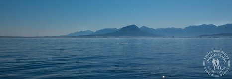 Scuba Diving In Strand: Strand Reefs | Indigo Scuba | Indigo Scuba | Scoop.it