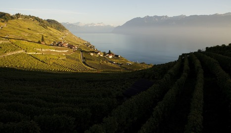 The Swiss make wine? Who knew? | Vitabella Wine Daily Gossip | Scoop.it