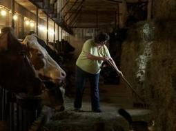 Struggling Dairy Farmers Find a 'Moo' Business Model | WFSU | co-op | Scoop.it