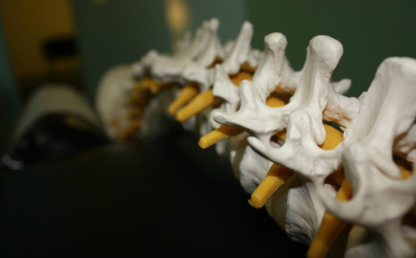 Woman grows nose tissue in spine - Science  AAAS | sciatica relief | Scoop.it