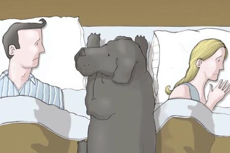 Sabes Qué Es La Depresión? Este Perro Te Dará Algunas Luces De Ello | Paz y bienestar interior para un Mundo Mejor | Scoop.it