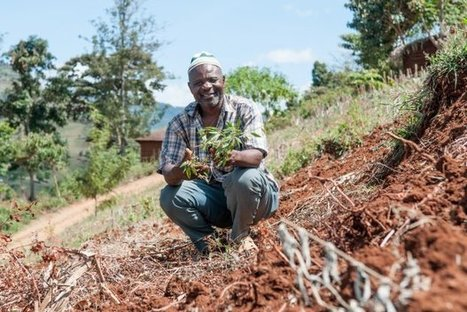 What impact does Shamba Shape Up have on farmers in Kenya?| CCAFS: CGIAR research program on Climate Change, Agriculture and Food Security | Climate Smart Agriculture | Scoop.it