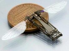 Studying butterfly flight to help build bug-size flying robots | Sci-fi | Scoop.it