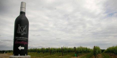 Viticulture : la Cave du marmandais au tribunal ce vendredi | Images et infos du monde viticole | Scoop.it