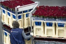 Not by air alone, flowers shipping by ocean now | Global Logistics Trends and News | Scoop.it