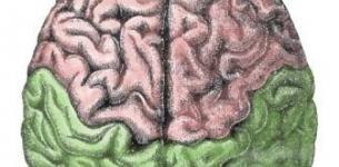 The Neuroscience of Creativity | Kreativitätsdenken | Scoop.it
