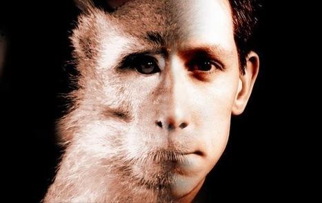 Apprendre à toucher l'autre enfin -Une éthique animale dans la philosophie de Derrida / Patrick Llored | Ethique animale | Scoop.it
