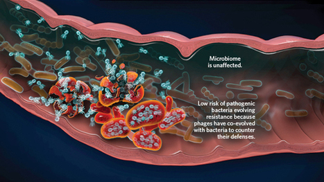 Clearing Gut Infections | The Scientist Magazine® | Hawaii Science and Technology Digest | Scoop.it